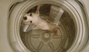 Washer Dog